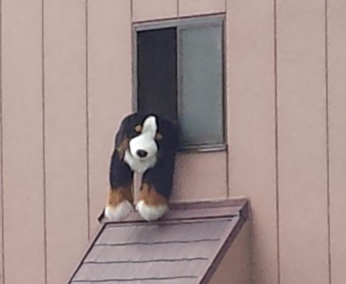 グロッキー犬01
